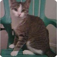 Adopt A Pet :: Plia - Reston, VA