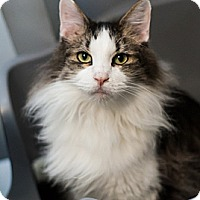 Adopt A Pet :: Harry - Lakewood, CO