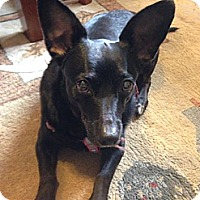 Adopt A Pet :: Pepper - Sinking Spring, PA