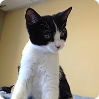 Adopt A Pet :: Rowena - Island Park, NY