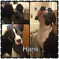 Adopt A Pet :: Hank--urgently needs foster - Valley Springs, CA
