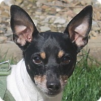 Adopt A Pet :: Mickey - North Olmsted, OH