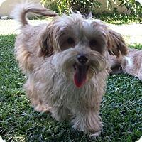 Adopt A Pet :: Teddy - San Dimas, CA