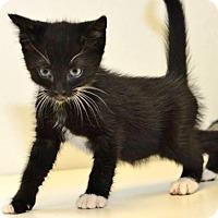 Adopt A Pet :: Hattie Jane - Davis, CA