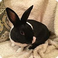 Adopt A Pet :: Orion - Watauga, TX
