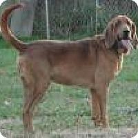 Adopt A Pet :: Jake - Columbus, IN