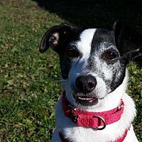 Adopt A Pet :: Doc Fang, aka Peanut - Grayslake, IL