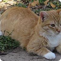 Adopt A Pet :: Emily - Gonzales, TX