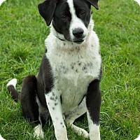Adopt A Pet :: Eli - Georgetown, KY