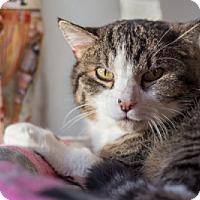 Adopt A Pet :: Okie - Lombard, IL