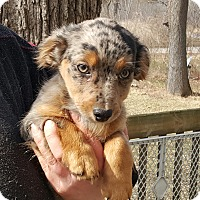 Adopt A Pet :: Diedre - ADOPTED!! - Antioch, IL