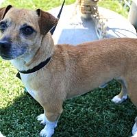 Adopt A Pet :: Jasper - Chula Vista, CA