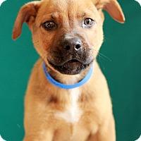 Adopt A Pet :: Benson - Waldorf, MD