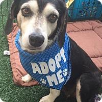 Adopt A Pet :: Becky - Lincolnton, NC