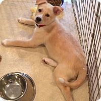 Adopt A Pet :: Gage - Rockaway, NJ