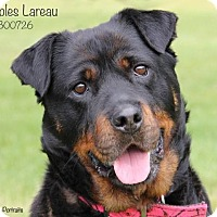 Adopt A Pet :: Bubbles Lareau - Troy, MI
