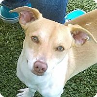 Adopt A Pet :: Tyler - Chula Vista, CA