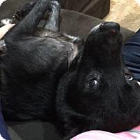 Adopt A Pet :: Lucy - Overland Park, KS