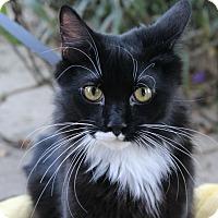 Adopt A Pet :: Rigby - Ocean Springs, MS