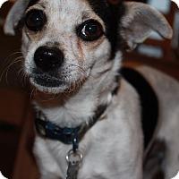 Adopt A Pet :: Durango - Duchess, AB