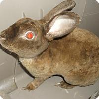 Adopt A Pet :: VELVET - Gloucester, VA