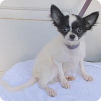 Adopt A Pet :: Bruiser - Birch Tree, MO