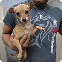 Adopt A Pet :: A26 Jacob - Odessa, TX