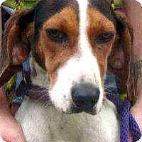 Adopt A Pet :: ella - Shelter Island, NY