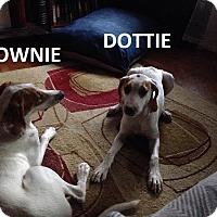 Adopt A Pet :: Brownie - Elizabeth City, NC