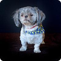 Adopt A Pet :: Brimley - Van Nuys, CA
