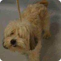 Adopt A Pet :: Nelson - Ridgefield, CT