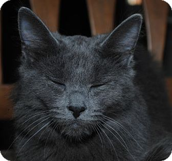 Domestic Mediumhair Kitten for adoption in Waxhaw, North Carolina - Hailey