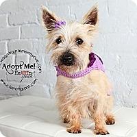 Adopt A Pet :: Marsha - Omaha, NE