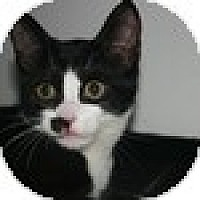 Adopt A Pet :: Ned - Vancouver, BC