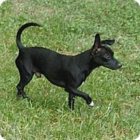 Adopt A Pet :: J.J. - Cantonment, FL