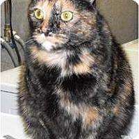 Adopt A Pet :: Honey - Byron Center, MI