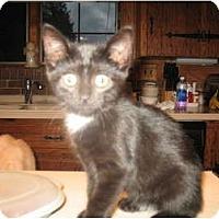Adopt A Pet :: Marissa - Acme, PA