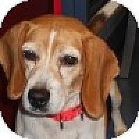 Adopt A Pet :: Joanie - Novi, MI
