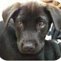Adopt A Pet :: Chaos - Palmyra, WI