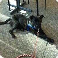Adopt A Pet :: Jasmine (aka Jazz) - Sacramento, CA