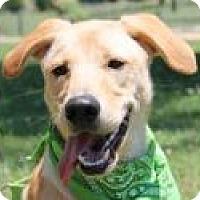 Adopt A Pet :: Raider - Pittsboro, NC