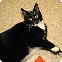 Adopt A Pet :: Linda - Milford, MA