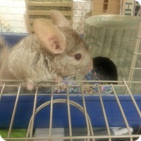 Adopt A Pet :: Speedy - Patchogue, NY