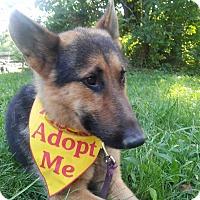Adopt A Pet :: Alaric - Louisville, KY
