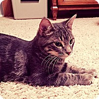 Adopt A Pet :: Rockwell - Scottsdale, AZ