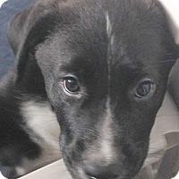 Adopt A Pet :: Blaze - Cincinnati, OH