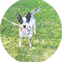 Adopt A Pet :: Zak -Rescueadopt.com - Norwich, NY