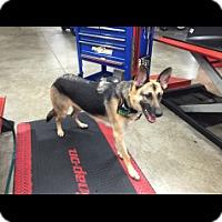 Adopt A Pet :: Bravo - Houston, TX