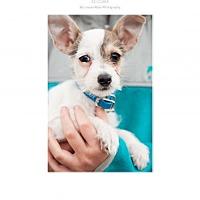 Adopt A Pet :: Buddy - Edmond, OK