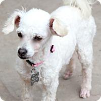Adopt A Pet :: Kola - Woonsocket, RI